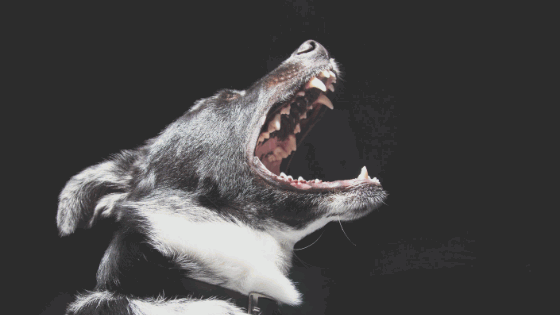 Personal Injury Attorney Specializing in Dog Attacks